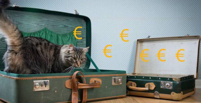 Bild zeigt Katze in einem Koffer und Euro-Symbole, welche die Preise für die Beförderung der Katze im Gepäck symbolisieren sollen